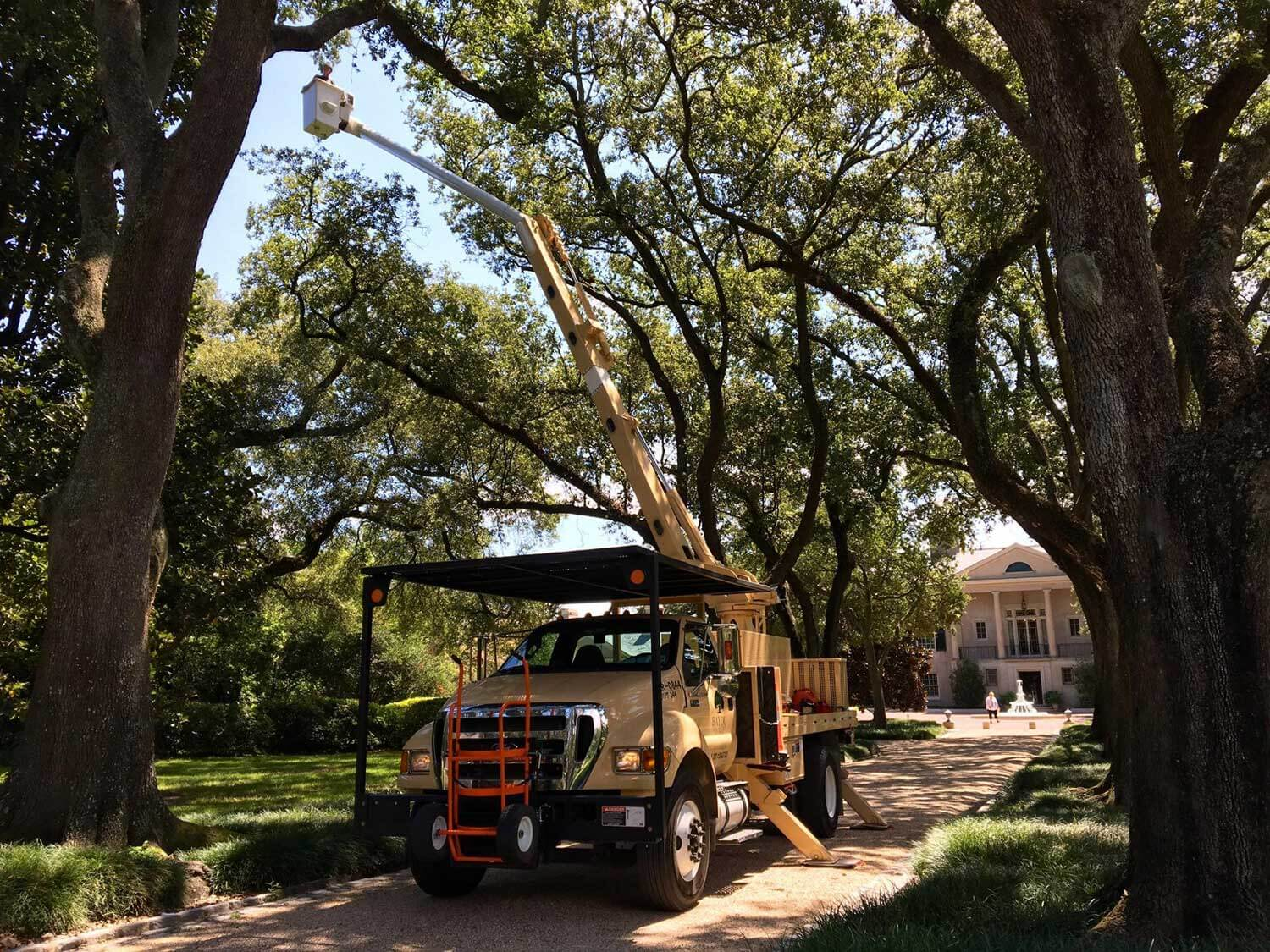 Commercial Tree Service-Daytona Beach's Best Tree Trimming and Tree Removal Services-We Offer Tree Trimming Services, Tree Removal, Tree Pruning, Tree Cutting, Residential and Commercial Tree Trimming Services, Storm Damage, Emergency Tree Removal, Land Clearing, Tree Companies, Tree Care Service, Stump Grinding, and we're the Best Tree Trimming Company Near You Guaranteed!