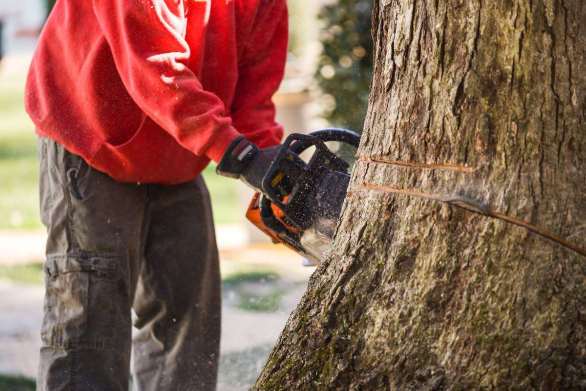 Contact Us-Daytona Beach's Best Tree Trimming and Tree Removal Services-We Offer Tree Trimming Services, Tree Removal, Tree Pruning, Tree Cutting, Residential and Commercial Tree Trimming Services, Storm Damage, Emergency Tree Removal, Land Clearing, Tree Companies, Tree Care Service, Stump Grinding, and we're the Best Tree Trimming Company Near You Guaranteed!