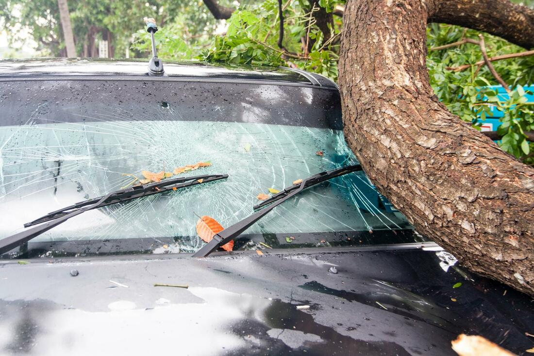 Edgewater-Daytona Beach's Best Tree Trimming and Tree Removal Services-We Offer Tree Trimming Services, Tree Removal, Tree Pruning, Tree Cutting, Residential and Commercial Tree Trimming Services, Storm Damage, Emergency Tree Removal, Land Clearing, Tree Companies, Tree Care Service, Stump Grinding, and we're the Best Tree Trimming Company Near You Guaranteed!