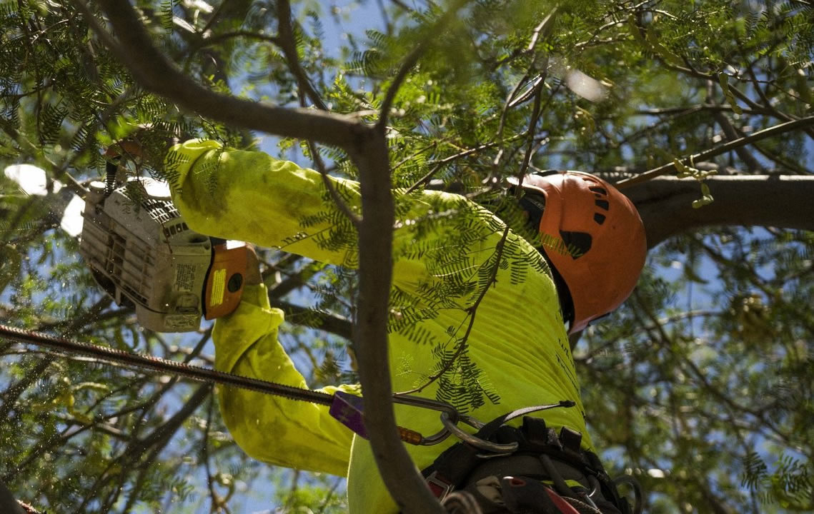 Residential Tree Services-Daytona Beach's Best Tree Trimming and Tree Removal Services-We Offer Tree Trimming Services, Tree Removal, Tree Pruning, Tree Cutting, Residential and Commercial Tree Trimming Services, Storm Damage, Emergency Tree Removal, Land Clearing, Tree Companies, Tree Care Service, Stump Grinding, and we're the Best Tree Trimming Company Near You Guaranteed!