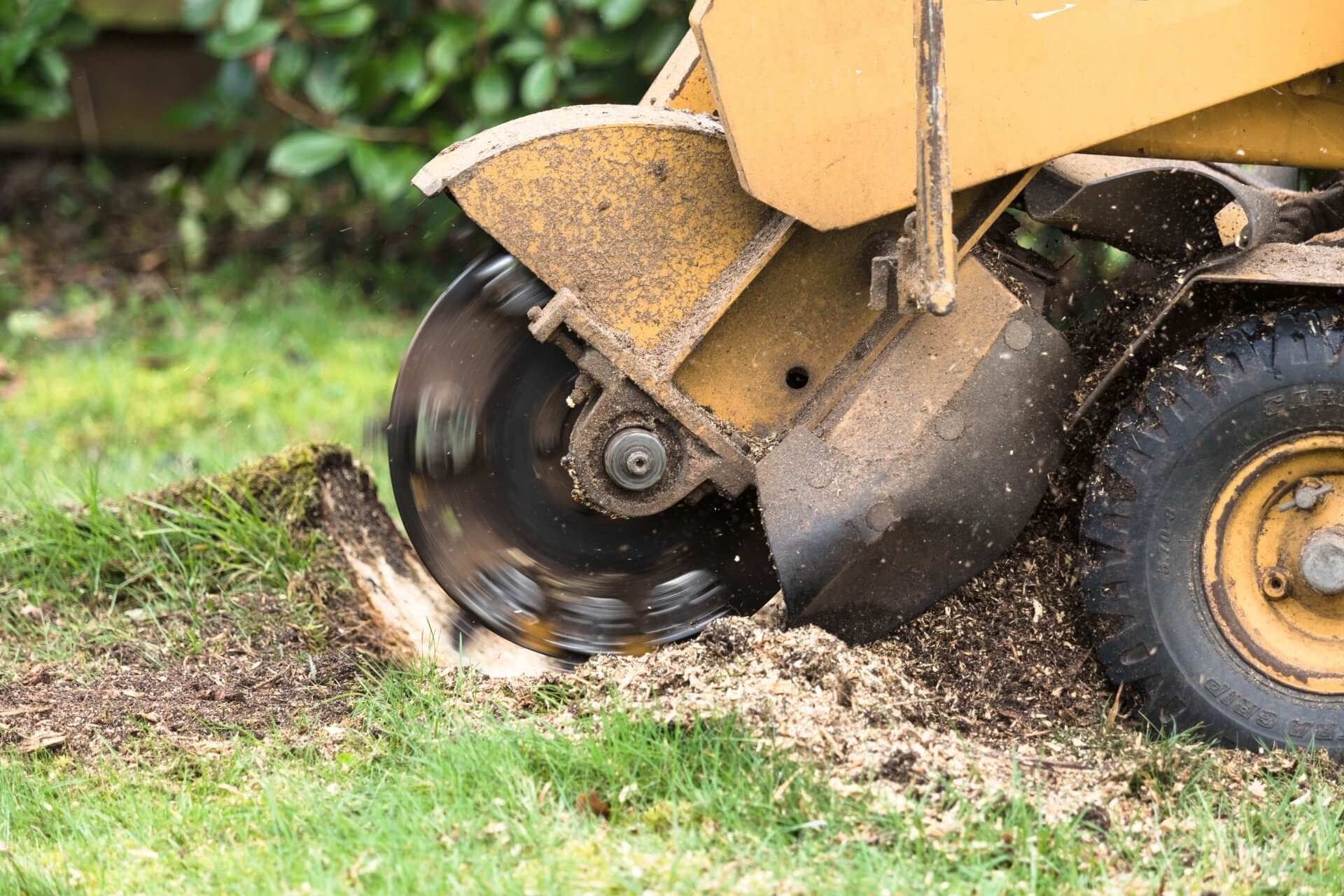Stump Grinding-Daytona Beach's Best Tree Trimming and Tree Removal Services-We Offer Tree Trimming Services, Tree Removal, Tree Pruning, Tree Cutting, Residential and Commercial Tree Trimming Services, Storm Damage, Emergency Tree Removal, Land Clearing, Tree Companies, Tree Care Service, Stump Grinding, and we're the Best Tree Trimming Company Near You Guaranteed!