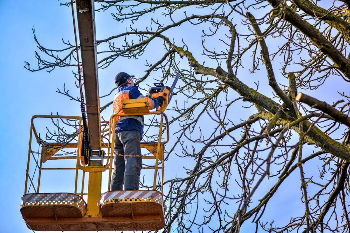 Tree Trimming-Daytona Beach's Best Tree Trimming and Tree Removal Services-We Offer Tree Trimming Services, Tree Removal, Tree Pruning, Tree Cutting, Residential and Commercial Tree Trimming Services, Storm Damage, Emergency Tree Removal, Land Clearing, Tree Companies, Tree Care Service, Stump Grinding, and we're the Best Tree Trimming Company Near You Guaranteed!
