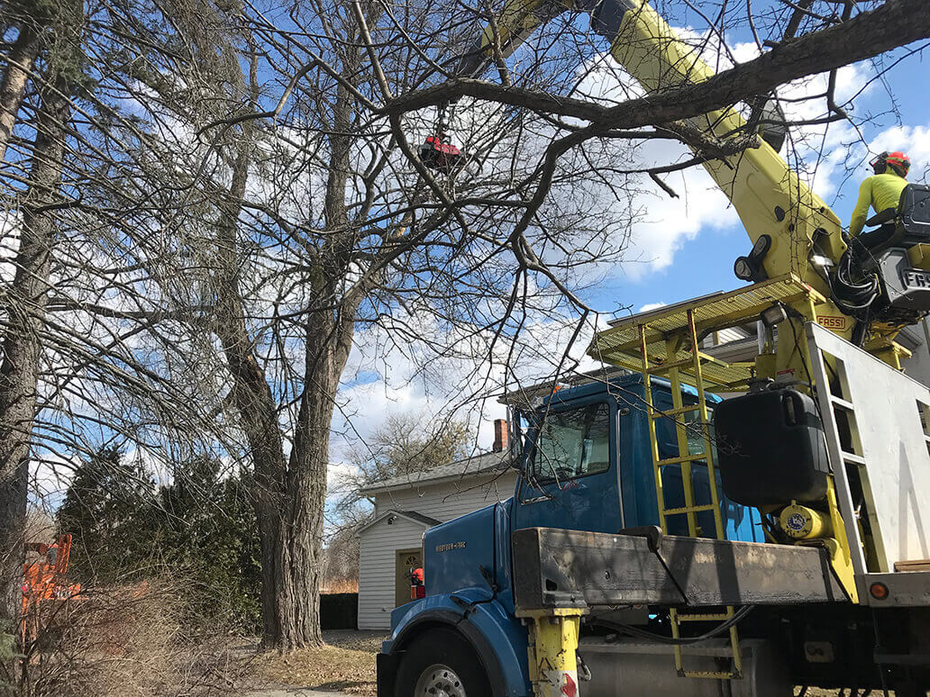 247-Tree-Removal-Daytona-Beach's-Best-Tree-Trimming-and-Tree-Removal