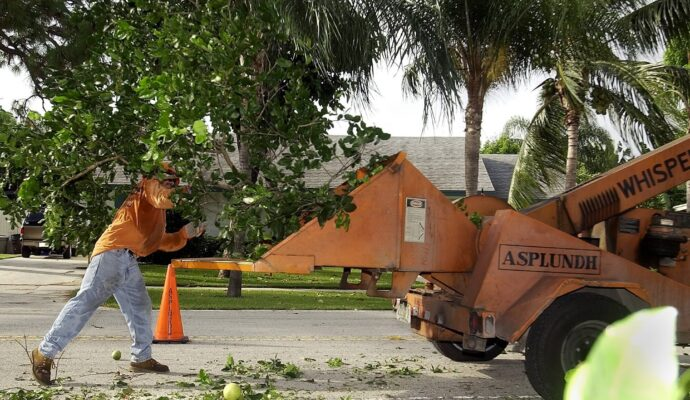 Daytona-Beach's-Best-Tree-Trimming-and-Tree-Removal-Services-Homepage-Image