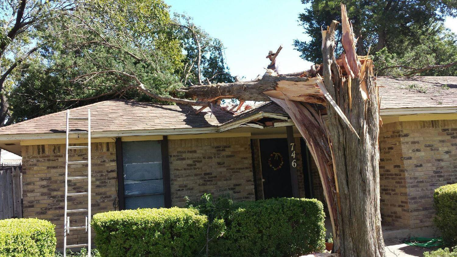 Emergency-Tree-Removal-Daytona-Beach's-Best-Tree-Trimming-and-Tree-Removal