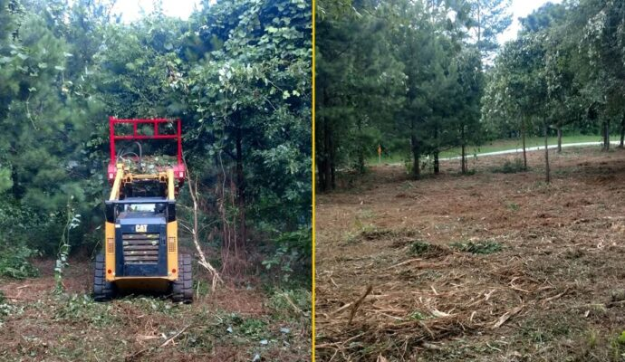 Land-Clearing-Daytona-Beach's-Best-Tree-Trimming-and-Tree-Removal