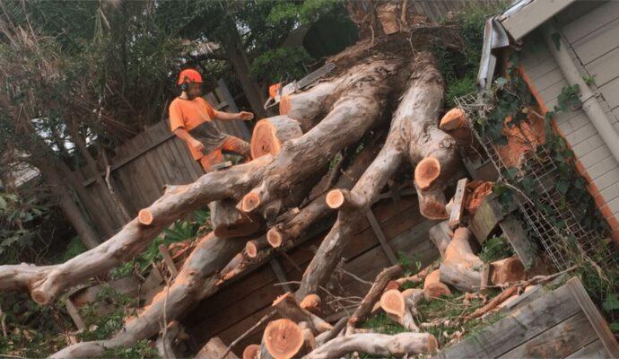 New-Smyrna-Beach-Daytona-Beach's-Best-Tree-Trimming-and-Tree-Removal