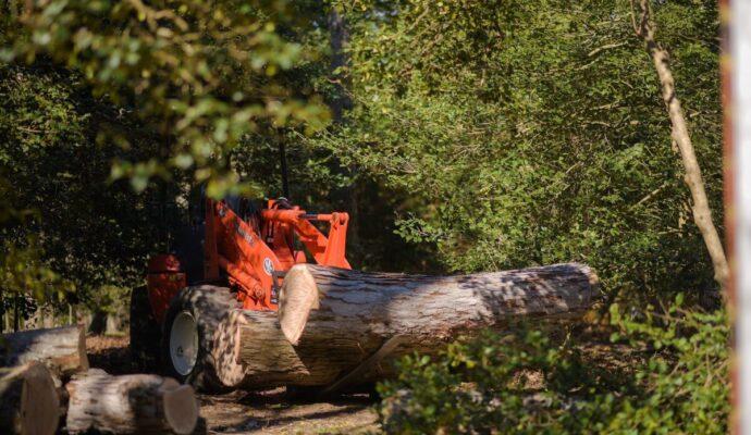 Ormond-Beach-Daytona-Beach's-Best-Tree-Trimming-and-Tree-Removal