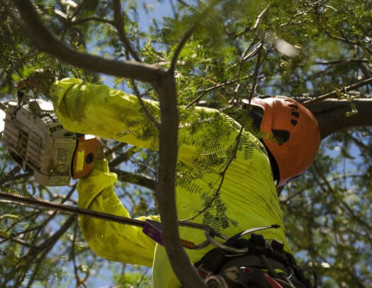 Residential-Tree-Services-Daytona-Beach's-Best-Tree-Trimming-and-Tree-Removal