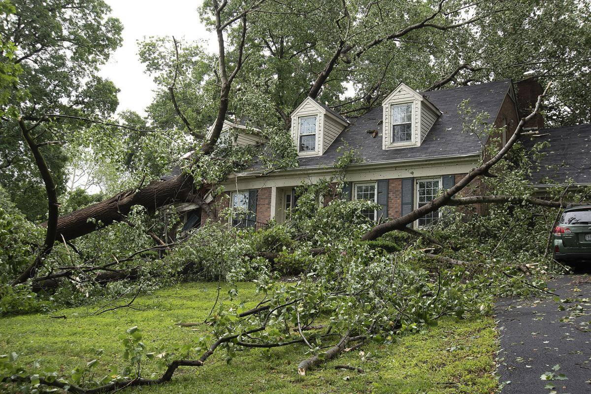 Storm-Damage-Daytona-Beach's-Best-Tree-Trimming-and-Tree-Removal
