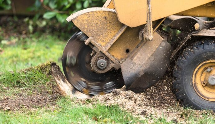Stump-Grinding-Daytona-Beach's-Best-Tree-Trimming-and-Tree-Removal