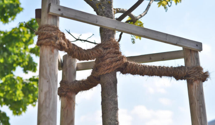 Tree-Bracing-Cabling-Daytona-Beach's-Best-Tree-Trimming-and-Tree-Removal