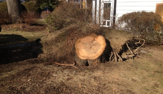 Tree-Stump-Removal-Daytona-Beach's-Best-Tree-Trimming-and-Tree-Removal