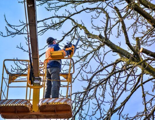 Tree-Trimming-Daytona-Beach's-Best-Tree-Trimming-and-Tree-Removal